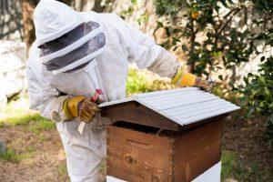 Flow Hive Inspection