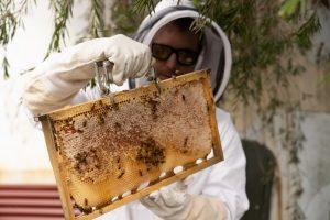 frame of honey
