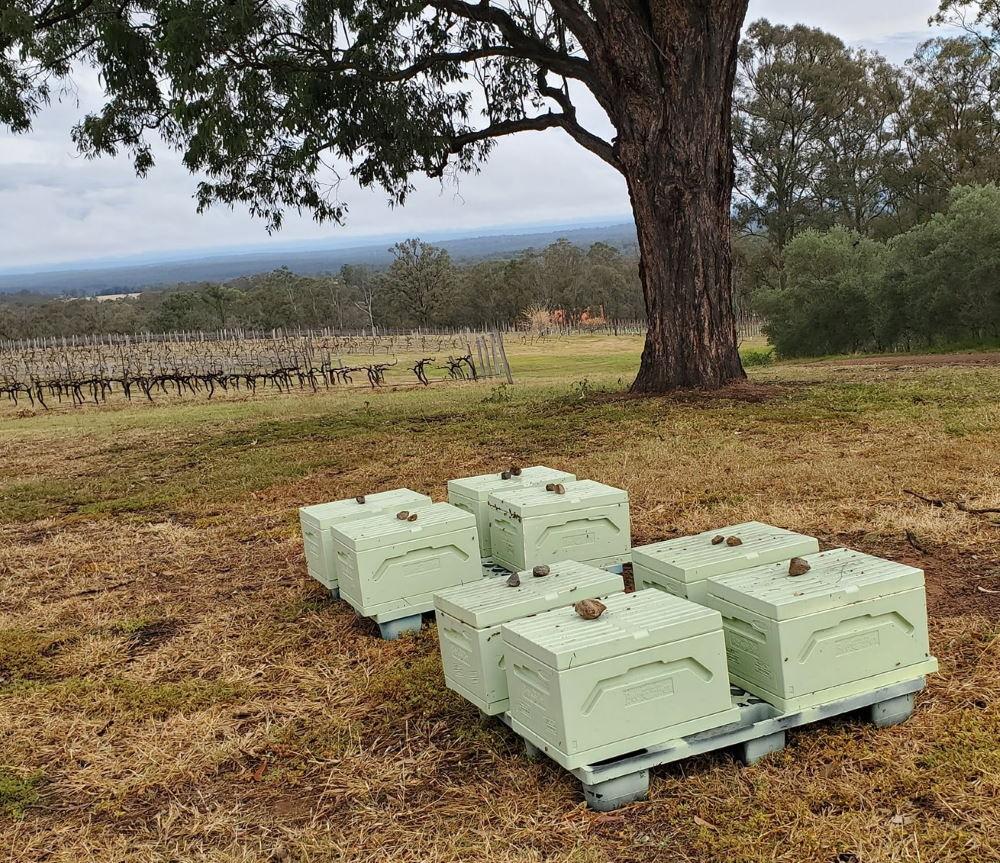 hunter valley beehives
